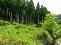 musashi-yukari16.jpg