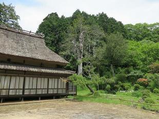 musashi-yukari5.jpg