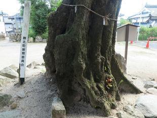 asakichi1.jpg