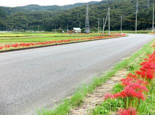 kokubunji-higan-11.jpg