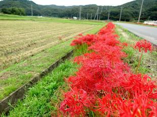 kokubunji-higan-12.jpg