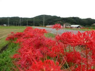 kokubunji-higan-3.jpg