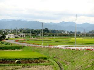 kokubunji-higan-5.jpg