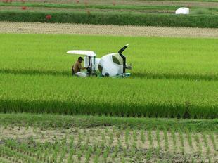 kokubunji-higan-7.jpg