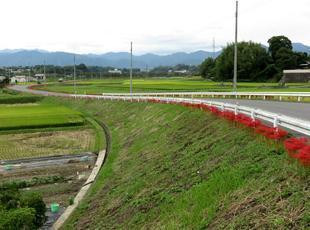 kokubunji-higan-9.jpg
