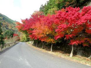 tsugawa17.jpg
