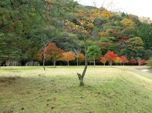 tsugawa20.jpg