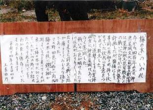 doi-umenoki1.jpg