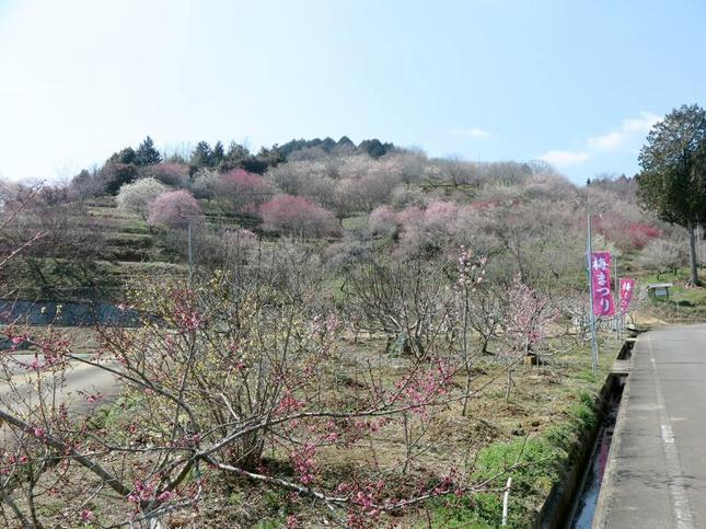 梅の里2019-20.jpg