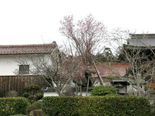 gokokuji3-3.jpg
