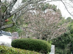 gokokuji3-4.jpg