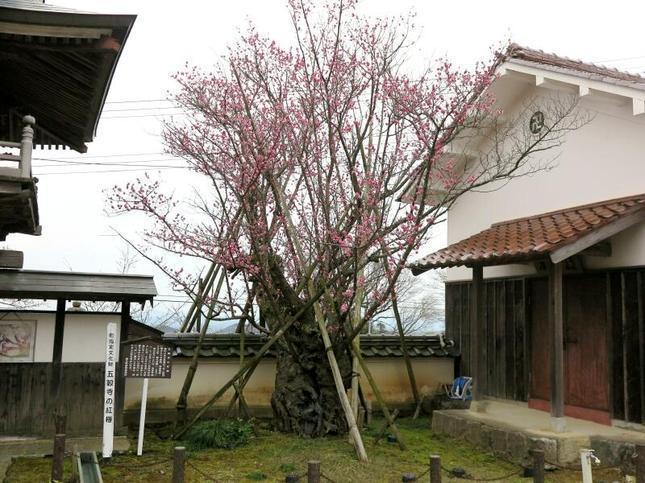 gokokuji3-6.jpg