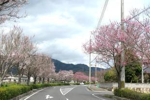 h-ichinimiya1.jpg