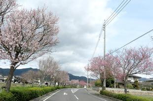 h-ichinimiya4.jpg