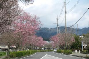 h-ichinimiya6.jpg