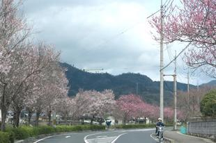 h-ichinimiya9.jpg