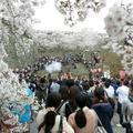 2019年4月7日 津山城(鶴山公園)のイベント