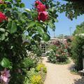 ガーデンカフェモコさんのバラの花です。