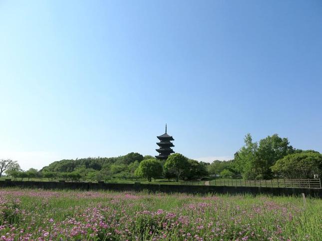 kokubunji6.jpg