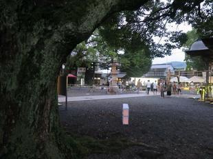 2019nagoshi1.jpg