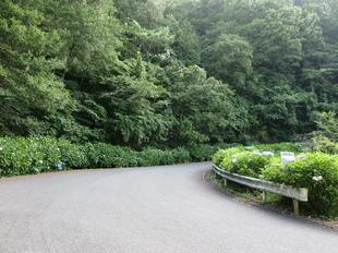 7-6oyama12.jpg