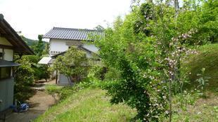 fukuyama7.jpg