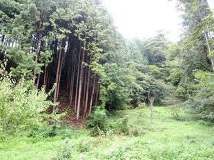 arikidawa2.jpg