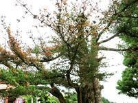 fukusenji-k19.jpg