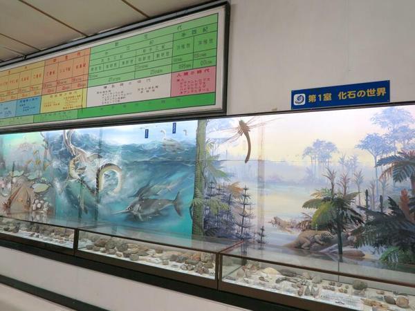 化石の世界(つやま自然のふしぎ館)