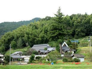 koryuji1.jpg