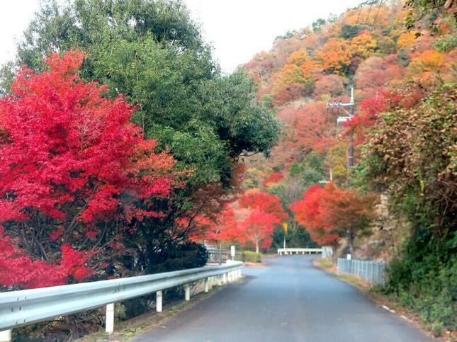 inaba-tsugawa1.jpg