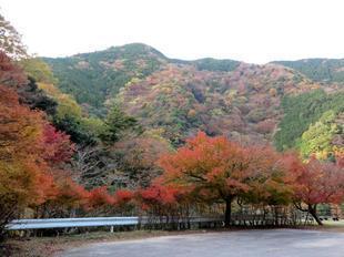 inaba-tsugawa16.jpg