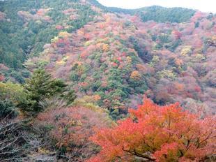 inaba-tsugawa17.jpg