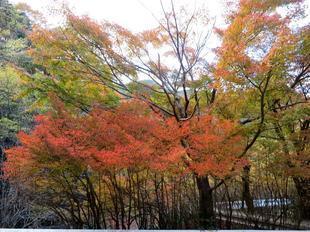 inaba-tsugawa18.jpg