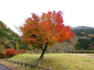 inaba-tsugawa5.jpg