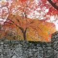 美しすぎる津山城(鶴山公園)の紅葉 2019