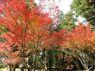 syurakuen11-20-113.jpg