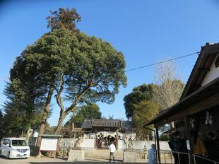 yayoi-haru2020-23.jpg