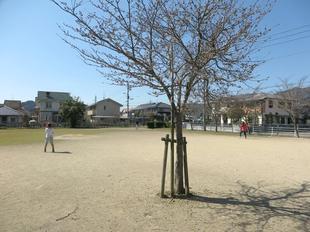 3-25chihara-koen2.jpg