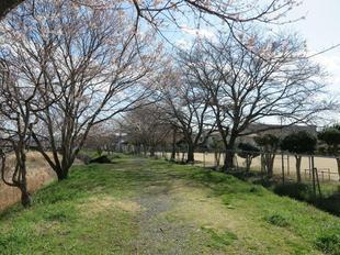 hanzako-kouen12.jpg