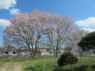 hanzako-kouen15.jpg