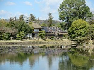sakura-syuraku23.jpg