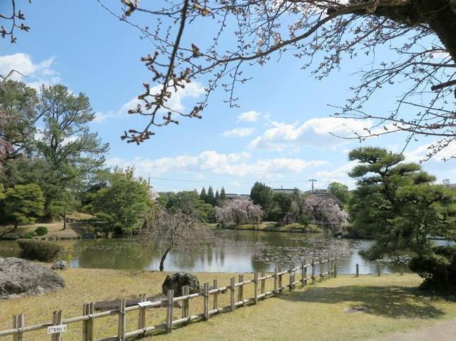 sakura-syuraku4.jpg
