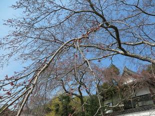 senkouji2020-3-17-19.jpg
