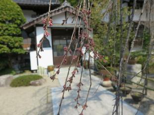 senkouji2020-3-17-29.jpg
