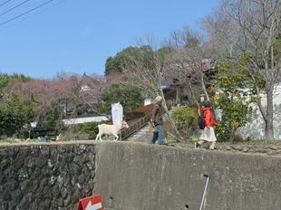 senkouji2020-3-17-40.jpg