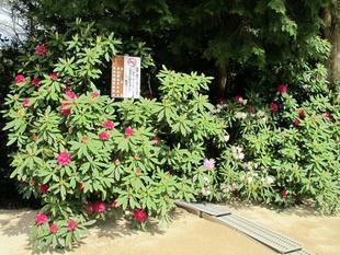 2013-5-2honzanji7.jpg