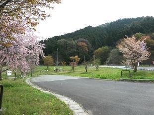 4-17-kagaminokobusi6.jpg