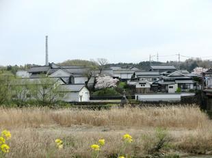 4-7kamogawa-sakura1.jpg