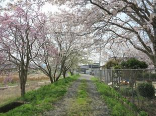 hanzako4-3-6.jpg